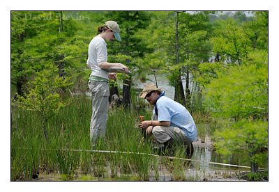 Carolina Vegetation Survey